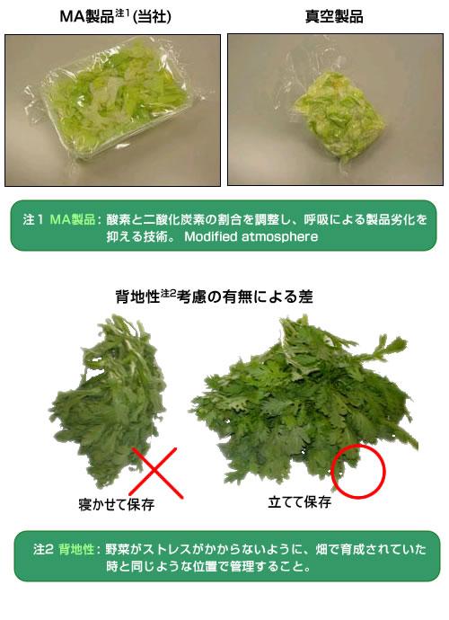 鮮度を保ったまま野菜を運ぶ技術力:MA製品:背地性考慮